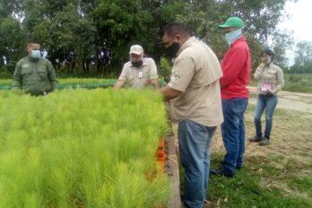 MDO tiene plan de siembra de 10 mil hectáreas