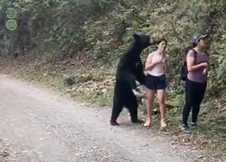 Pretenden encerrar a oso que se tomó una selfie con una mujer