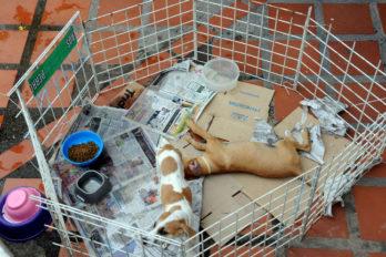 Fundaproba pide apoyo para atender a perritos sin hogar