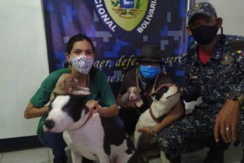 Rescatan a cuatro cachorros pitbull que vendían en divisas