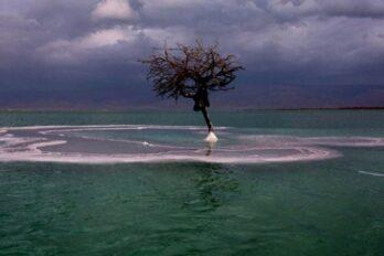 árbol en el mar muerto